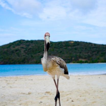 Blac Flamingo